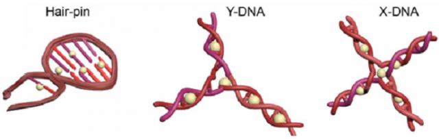 DNA로 만든 가닥 안에 항암제(상아색 구체)를 끼워넣었다. 머리핀(Hair-pin) 형태의 DNA 가닥 속에서는 항암제가 금방 방출됐으며, X자 형태에서는 천천히 방출됐다. - 중앙대 화학신소재공학부 제공